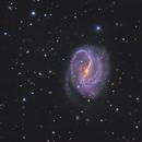NGC 7479,                                sydney