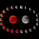Total Lunar Eclipse 2018,                                Frank Rogin