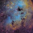 IC 410 - Tadpoles,                                David Andra