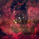 NGC2244 and Rosette Nebula,                                Markus A. R. Langlotz