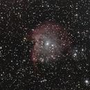 Monkey Head Nebula,                                pterodattilo