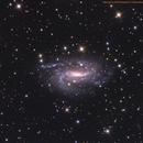 Spiral Galaxy NGC 925,                                Bob Birket