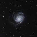 M101,                                Franz