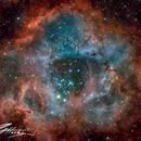 The Rosette Nebula,  NGC - 2237,                                Matt Harbison