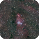 NGC 2264, Konus Nebel,                                mdohr