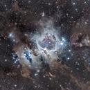 M42 • Nébuleuse d'Orion et ses nuages,                                AnthonyDardanelli