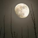 Moon in the fog,                                Giuseppe Donatiello