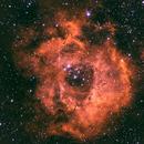 Rosette Nebula,                                Genes9