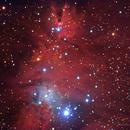 Christmas Tree Nebula, Cone Nebula, NGC2264 Cluster, Fox Fur Nebula,                                Jack Liu