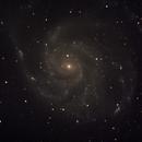The Pinwheel Galaxy - M101,                                Corey Rueckheim