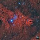 A little cone on Christmas Tree nebula,                                Lorenzo Taltavull Menéndez