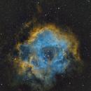 NGC2244 Rosette Nebula,                                Peter Jenkins