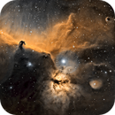 NGC2024 / IC434 - The Flame & Horsehead Nebulas in Orion,                                Fran D.