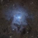 NGC 7023 Iris nebula,                                noodle