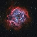 The Rosette Nebula,                                John Landreneau