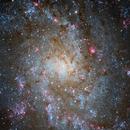 M 33 (Triangulum Galaxy),                                DetlefHartmann