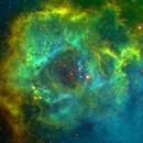 C49 Rosette Nebula-NGC 2237-Ha-SHO-Meade 80 ED triplet-Orion flattener-ASI 1600 MM-Pro-crop,                                Adel Kildeev