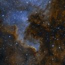 NGC 7000 - The North America Nebula,                                Evelyn Decker