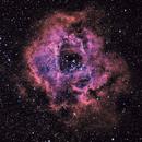 NGC2237: The Rosette Nebula Bicolour (Ha/OIII) (2019),                                Daniel Tackley