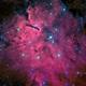 NGC 6823,                                Mark Bailey