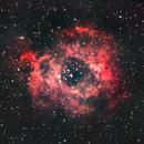 Rosette Nebula,                                Thi