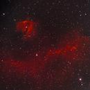 Sh2 296 Seagul Nebula,                                cajusor