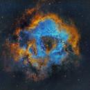 NGC 2244 Rosette nebula Hubble Palette,                                Paul Schuberth