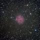 Cocoon Nebula,                                Seymore Stars