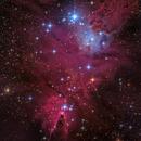 Christmas Tree Nebula (NGC 2264),                                Miles Zhou