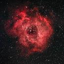Rosette Nebula,                                Tom