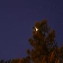 Venus Behind The Pine Tree,                                bilgebay