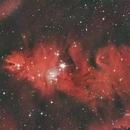 NGC 2264,                                Crisan Sorin