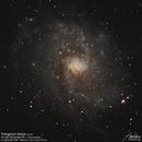 Triangulum Galaxy (M33),                                Godfried