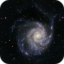 M101 The Pinwheel Galaxy,                                Wes Higgins
