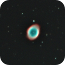 Ring Nebula Newt Tryout,                                Mike Bleiweiss
