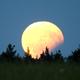 Moon Eclipse 2017,                                Norbert Reuschl