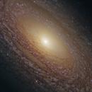 NGC 2841 - Flocculent Spiral Galaxy,                                Steven Marx