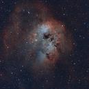 IC410: The Tadpoles,                                FlapAstro