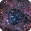 The Rosette Nebula / Caldwell 49,                                Terry Robison