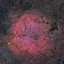 IC1396 wide field,                                David