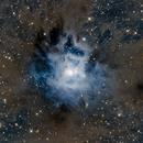 NGC 7023, The Cosmic Flower of Cepheus,                                Przemysław Majewski & teleskopy.pl
