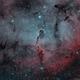 IC1396 - Elephant's Trunk (HOO),                                Richard Bratt