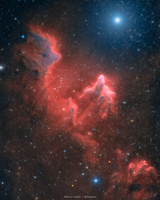 The ghost of Cassiopée / IC59, IC63 and y Cas,                                Maroun Habib