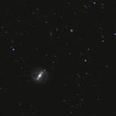 NGC 4314,                                Josef Büchsenmeister