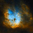 Tadepole Nebula IC 410,                                Phillip Esce