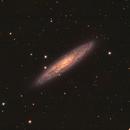 NGC253 the Sculptor Galaxy,                                Reggie