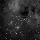 IC410 - The Tadpoles (Ha),                                Bill Worley