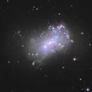 NGC 4449,                                Frank Colosimo