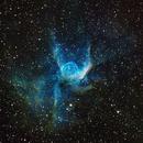 NGC 2359  THOR'S HELMET,                                APshooter