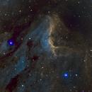 Pelican Nebula (IC 5070),                                Jenke ter Horst